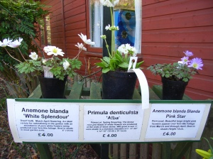 Barnsdale Gardens Rutland: Spring